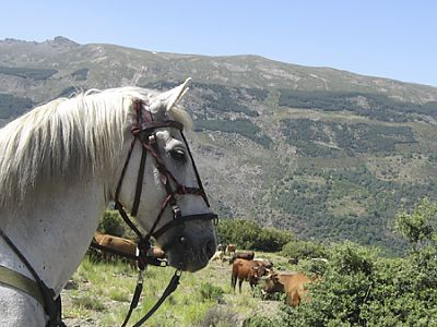 Spanish and horseback riding at Sierra Nevada National Park